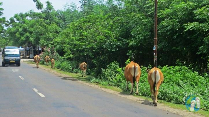 Tanjung-Bira-Dea-Sihotang (6)