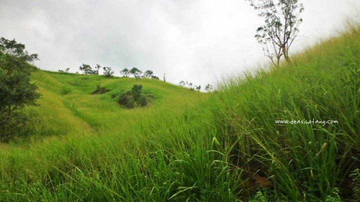 Perahera-Kandy (3)