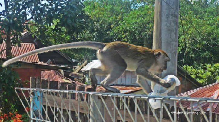 Bukittinggi-West-Sumatera-Indonesia (14)