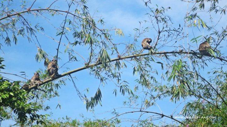 Bukittinggi-West-Sumatera-Indonesia (15)