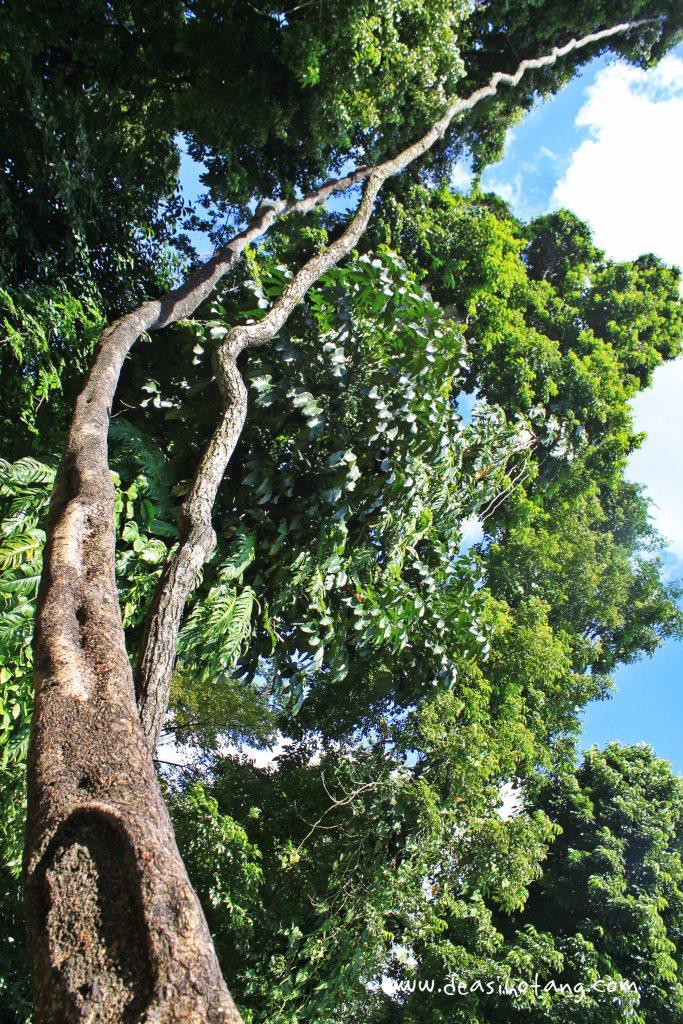 001-Bogor Botanical Gardens (Kebun Raya Bogor)-DeaSihotang
