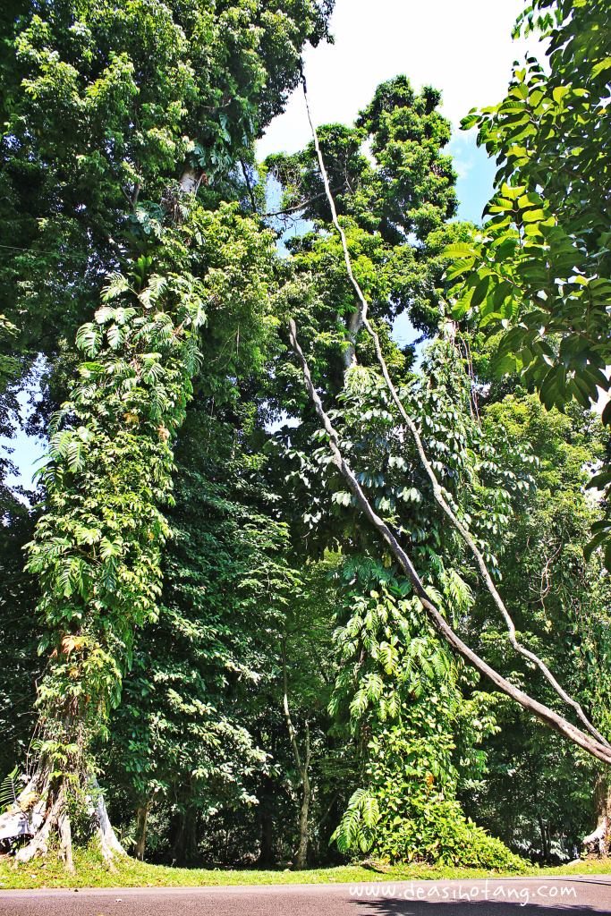 002-Bogor Botanical Gardens (Kebun Raya Bogor)-DeaSihotang