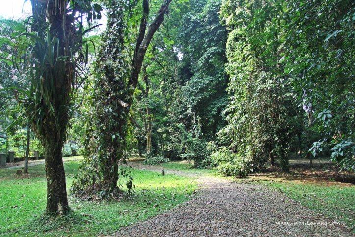 004-Bogor Botanical Gardens (Kebun Raya Bogor)-DeaSihotang