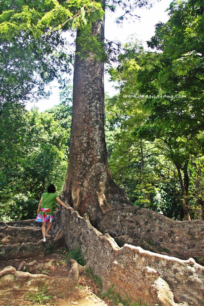 010-Bogor Botanical Gardens (Kebun Raya Bogor)-DeaSihotang