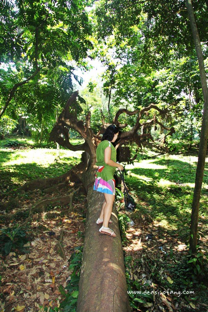 011-Bogor Botanical Gardens (Kebun Raya Bogor)-DeaSihotang