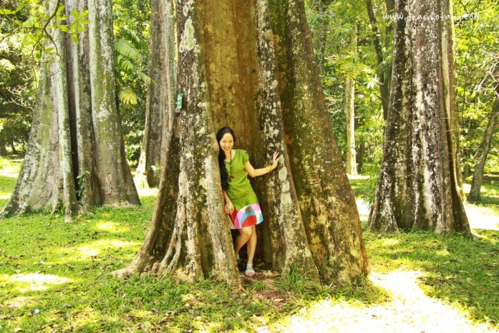 013-Bogor Botanical Gardens (Kebun Raya Bogor)-DeaSihotang