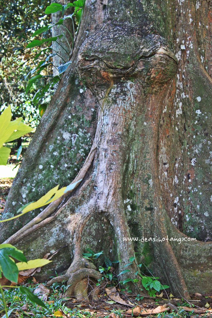 014-Bogor Botanical Gardens (Kebun Raya Bogor)-DeaSihotang