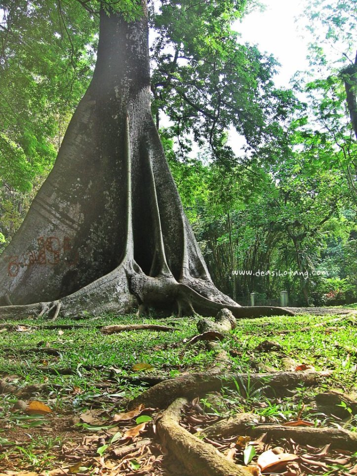 015-Bogor Botanical Gardens (Kebun Raya Bogor)-DeaSihotang