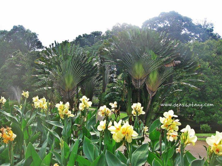 021-Bogor Botanical Gardens (Kebun Raya Bogor)-DeaSihotang