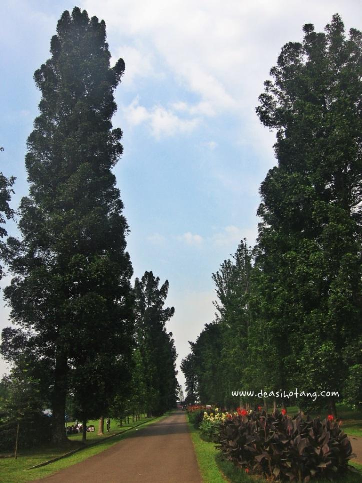 022-Bogor Botanical Gardens (Kebun Raya Bogor)-DeaSihotang