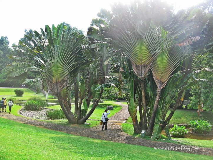 023-Bogor Botanical Gardens (Kebun Raya Bogor)-DeaSihotang