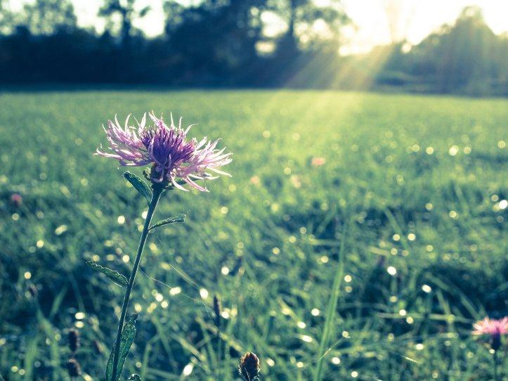 single_flower_at_the_latest_sunbeam_by_eldenim-d5hwrqi