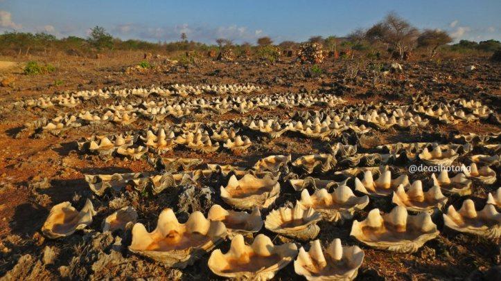 The-Memorable-Charm-of-Semau-Island-NTT (17)