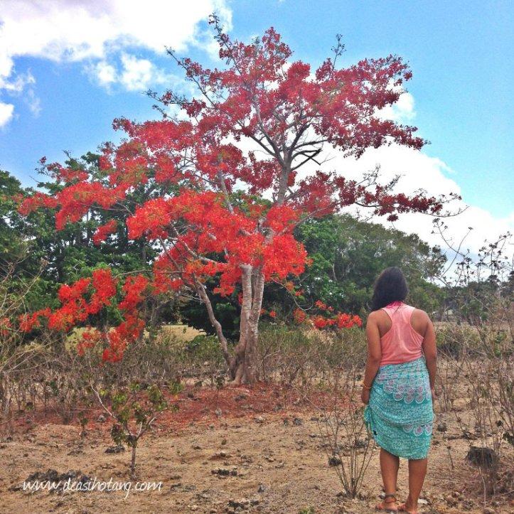 Hal-Kecil-Membuatku-Cinta-Pulau-Rote (10)