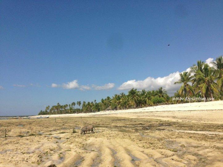 Hal-Kecil-Membuatku-Cinta-Pulau-Rote (4)