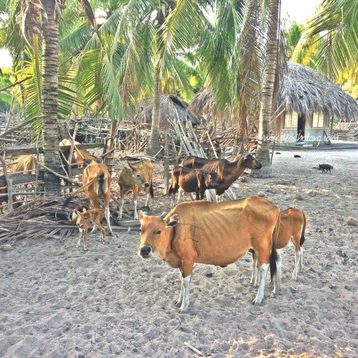 Hal-Kecil-Membuatku-Cinta-Pulau-Rote (5)