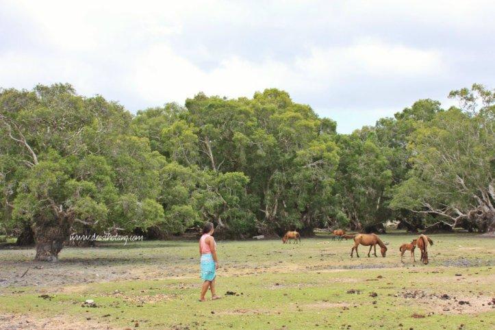 Hal-Kecil-Membuatku-Cinta-Pulau-Rote (6)