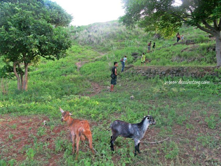 Kolisia-Hill-DeaSihotang (3)